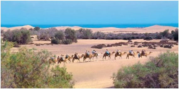 Dunes de maspalomas grande canarie espagne 13 - 1 part 3
