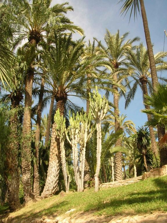 Palmeraie D Elche - Avis de voyageurs sur Palm Groves (Palmeral) of